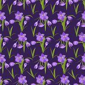 Crocus Flowers Spring Pattern Background Beautiful Violet Flowering Illustration Vector Nature Purpl poster
