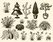 Garden Plants Vector Gardening And Planting With Decorative Tree Or Flowers Planted Outdoors Illustr poster