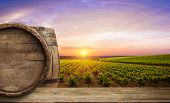 Ripe Wine Grapes On Vines In Tuscany, Italy. Picturesque Wine Farm, Vineyard. Sunset Warm Light. poster