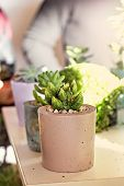 Composition With Succulents. Mini Succulent Garden, Botany poster