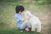 Cute Asian Child Playing With Siberian Husky Puppy In The Park poster