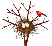 picture of bird-nest  - bird with nest - JPG