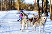 Girl Riding On Sled Pulled By Dog Siberian Huskies poster