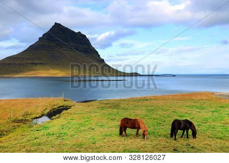 poster of Icelandic horses in front of Kirkjufell Mountain, Iceland, Europe