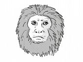 Retro Cartoon Style Drawing Of Head Of A Golden Lion Tamarin Or Leontopithecus Rosalia , An Endanger poster