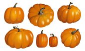 Orange Pumpkin Isolated On White. Realistic Vector Pumpkins. Set Of Orange Pumpkins For Halloween An poster