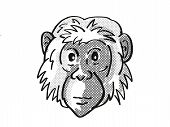 Retro Cartoon Mono Line Style Drawing Of Head Of A Bonobo Or Pan Paniscus, An Endangered Wildlife Sp poster