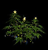 picture of humbug  - Decorated Christmas Marijuana Trees - JPG