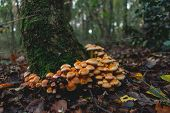 Green Forest Nature. Ancient Green Forest. Nature. Mushrooms. Natural Environment. Forest Nature. Na poster