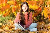 Reading Helps Seed Of Knowledge Grow. Cute Little Child Learning To Read On Autumn Landscape. Read A poster