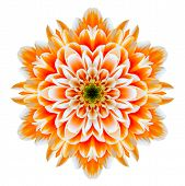 pic of kaleidoscope  - Orange Chrysanthemum Mandala Flower Kaleidoscope Isolated on White Background - JPG