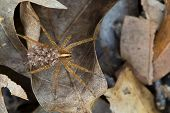 stock photo of baby spider  - This is a female wolf spider carrying her young on her back - JPG