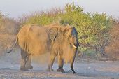 Elephant, African - Wildlife Background from Africa - Nature's Health Clinic of Sand