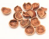 picture of cobnuts  - nut shell isolated on a white background - JPG