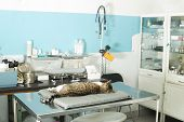 picture of anesthesia  - Cat anesthesia in veterinary - JPG