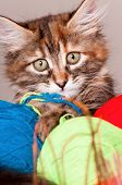 Close-up portrait of a cute kitten with clews of thread