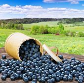 stock photo of wooden basket  - Blueberries in a basket is scattered on the wooden table