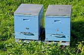 pic of beehives  - Agriculture background  - JPG