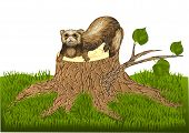 stock photo of ferrets  - ferret on stump isolated on whith background - JPG