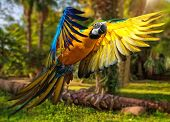 stock photo of parrots  - Beautiful colourful parrot over tropical background  - JPG