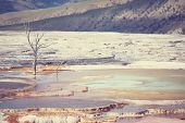 stock photo of mammoth  - Mammoth Hot Spring - JPG