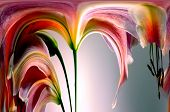 Beautiful Abstract image of pretty Pink Tiger Lilly