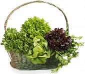 stock photo of celery  - Big basket of fresh several types of lettuce and celery - JPG