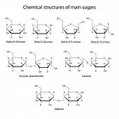 pic of skeletal  - Chemical structures of main sugars - JPG