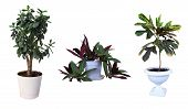 image of premises  - Ornamental plants - JPG