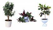 image of premises  - Ornamental plants - JPG