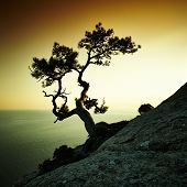 stock photo of crimea  - Tree and sea at sunset - JPG