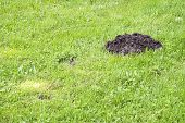 image of mole  - Mole mound in the sports stadium background - JPG