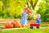 pic of baby cowboy  - Two happy children at pumpkin patch during Halloween cute curly little girl in a cowboy hat pushing a wheel barrow with a funny baby boy on a sunny autumn day on a farm - JPG