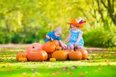 pic of baby cowboy  - Happy children at pumpking patch during Halloween little girl in a blue dress boots and cowboy hat and baby boy having fun together trick or treating on a sunny autumn day - JPG