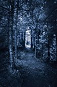 image of surreal  - Photographed with a 665nm near infrared converted camera of a dark surreal forest path - JPG