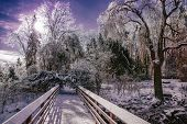 picture of covered bridge  - Ice covered tree branches sparkle and glow in the sunlight in a park setting - JPG