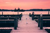 image of pier a lake  - A group of seagulls sit on a pier on a calm lake during a sunset - JPG
