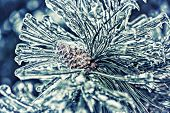 stock photo of pine-needle  - A close up of frozen pine tree needles and a pine cone covered in a thick layer of ice after an ice storm - JPG