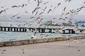 image of flock seagulls  - Cityscape  - JPG