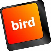 picture of keypad  - Button keyboard key keypad with bird word - JPG