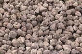 picture of sugar industry  - Sugar beets  - JPG