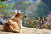 stock photo of lonely  - Dog enjoy a scenic view feel lonely concept  - JPG