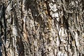 image of scabs  - Background like a  brown bark - JPG