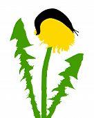 foto of slug  - Detailed and accurate illustration of slugs on dandelion - JPG