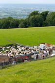 picture of broadway  - Sheep shearing outdoors on a hill near Broadway Tower in the Worcestershire part of the cotswolds - JPG