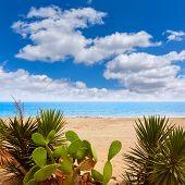 picture of nopal  - Almeria Mojacar beach in Mediterranean sea of Spain - JPG