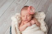 foto of sleeping beauty  - A portrait of a beautiful seven day old newborn baby girl wearing a large fabric rose headband - JPG