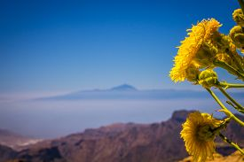 image of plateau  - Yellow flowers growing on a plateau of Roque Nublo - JPG