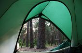 Green tent on the forest