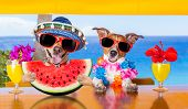 Dog At The Beach And Watermelon poster